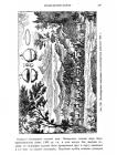стр. 247